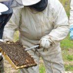 Création des jardins familiaux et du rucher pédagogique